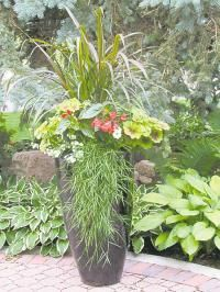 King Tut Papyrus - Great new plants for 2013 - article in - GARDENING: Contain your enthusiasm - Winnipeg Free Press Homes