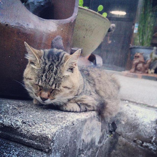 """""""全く気がつかない。  #常滑 #猫"""" Photo taken by @d884x on Instagram, pinned via the InstaPin iOS App! http://www.instapinapp.com (08/24/2015)"""