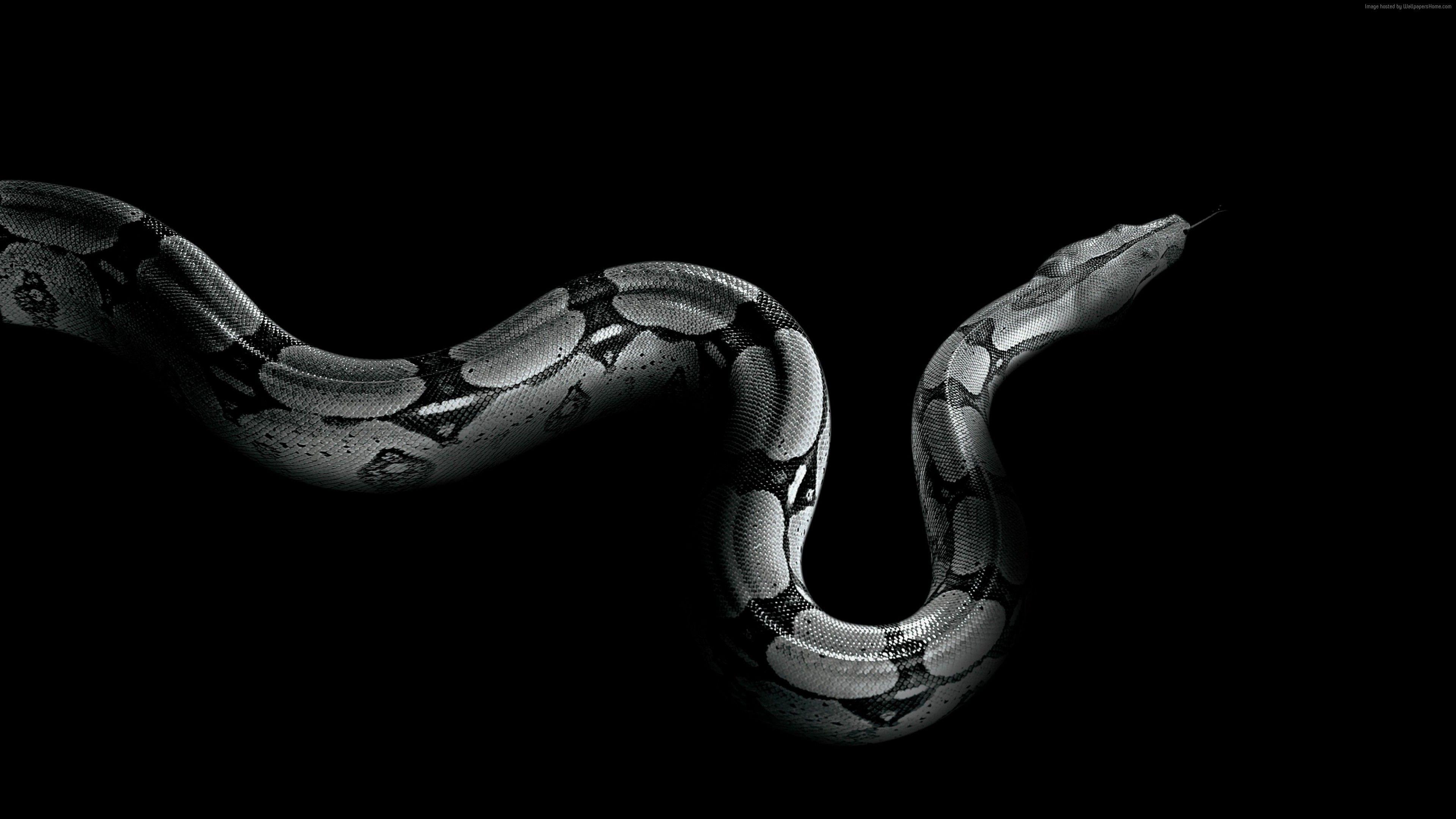Wallpaper Python Snake Animals Snake Wallpaper Animal