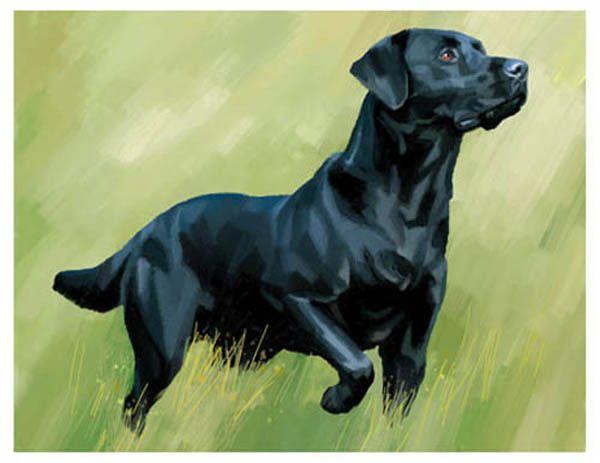 artav Black Labrador Retriever Lab ACEO Art Print Dog