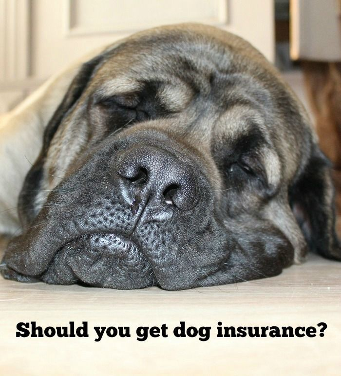 Pet Insurance Reviews 2020 Cost Coverage Comparisons Pet