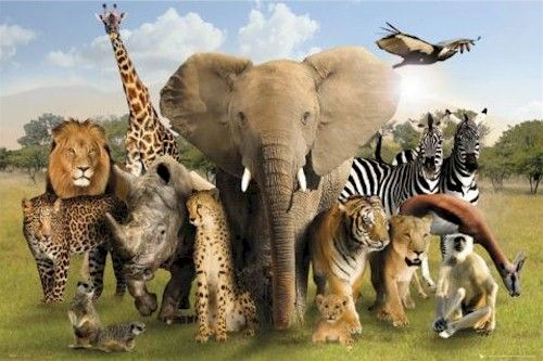 Pin by Cheryl Cutter on animals | Pinterest | Animal posters, Lion ...