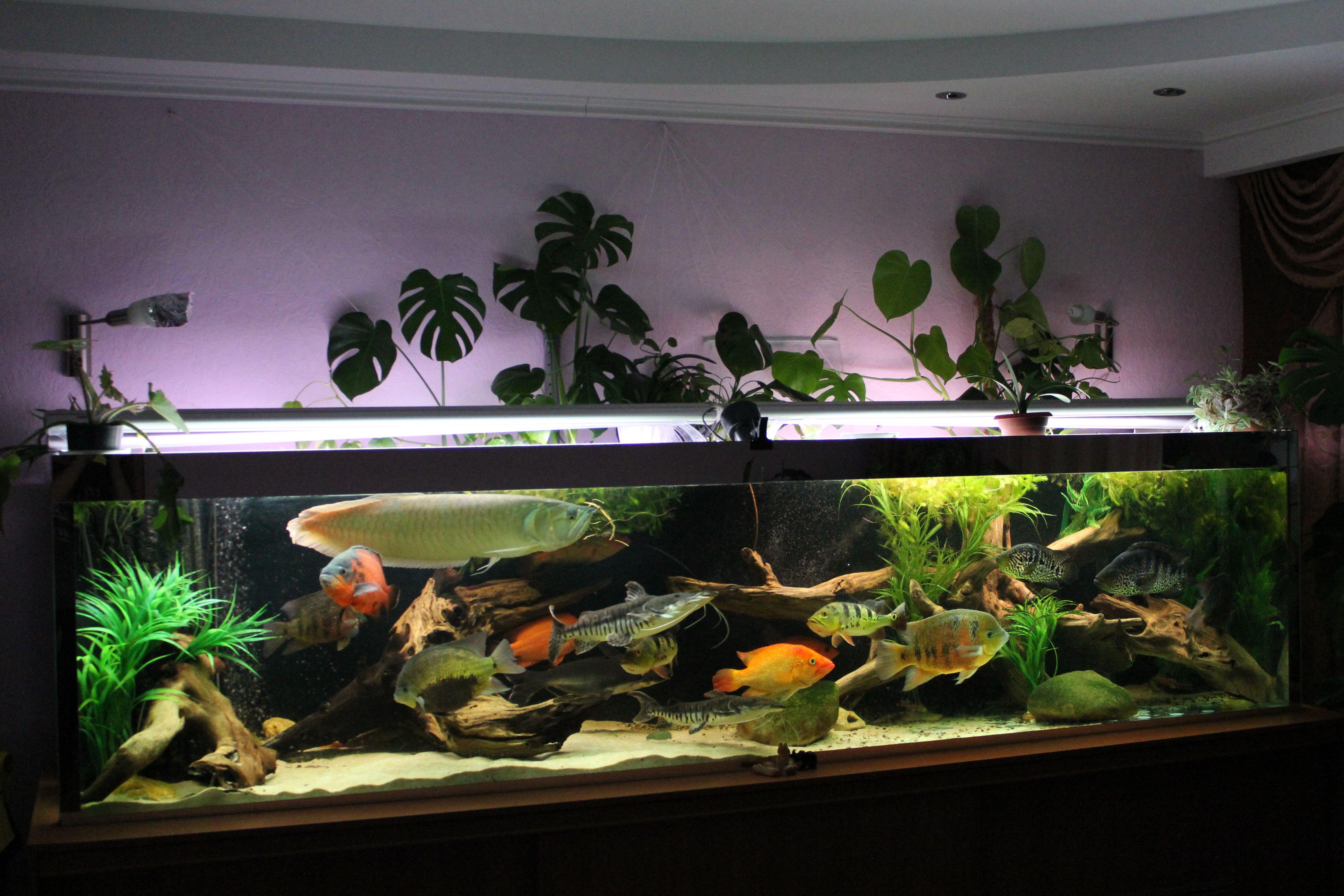 4cb7cb00886da0eeaee5423a9aaab70a Frais De Aquarium En Bois Schème