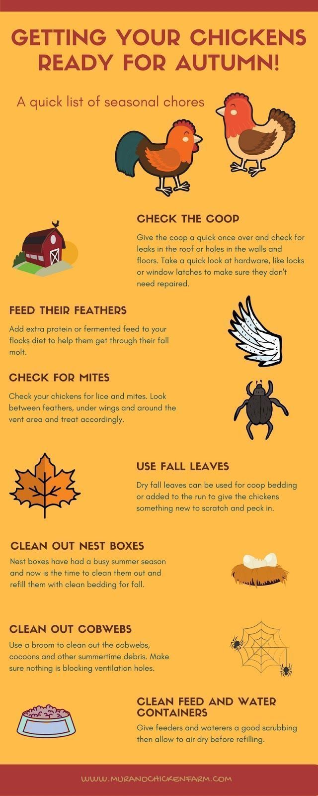 your chickens for Autumn As Autumn begins there are chores that need done in and around the chicken coop to prepare for cooler weather. Here are the 7 fall chores I do every year.As Autumn begins there are chores that need done in and around the chicken coop to prepare for cooler weather. Here are the 7 fall chores I do every year.