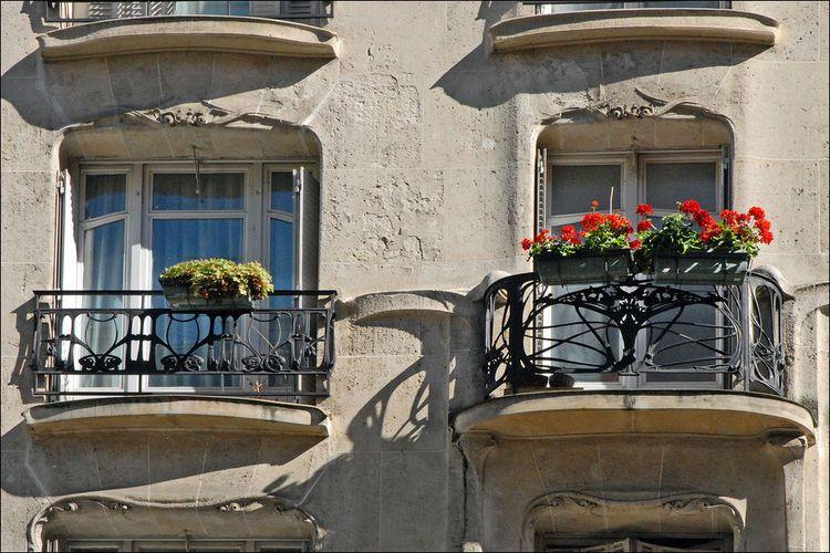 Fenêtres d'un immeuble art nouveau d'Hector Guimard à Paris (image)