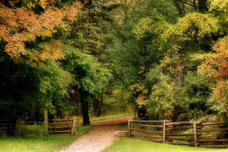 "Autumn is my most favorite season!  Image- ""A Path To Explore"" © M.Christine Duncan"