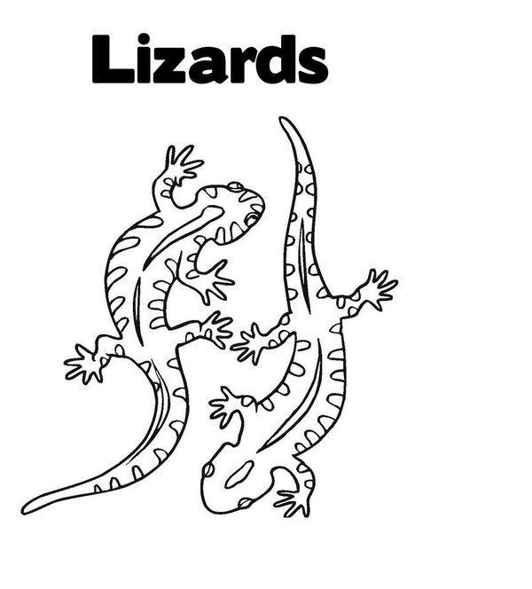 Lizard Coloring Pages Picture 15 Suosikkeja Coloring Pages