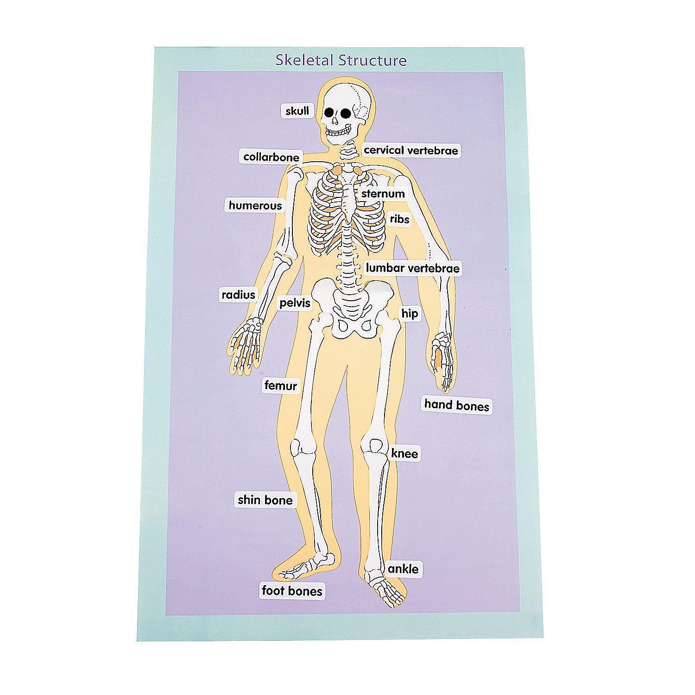 12 Skeletal Human Body Giant Sticker Scenes