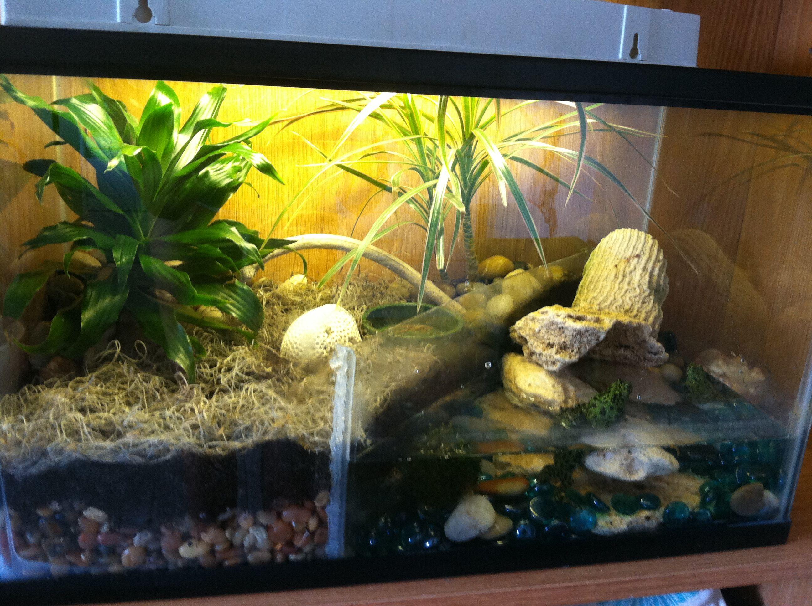 Diy frog habitat diy frog terrarium fire bellied toads for Fish tank frogs