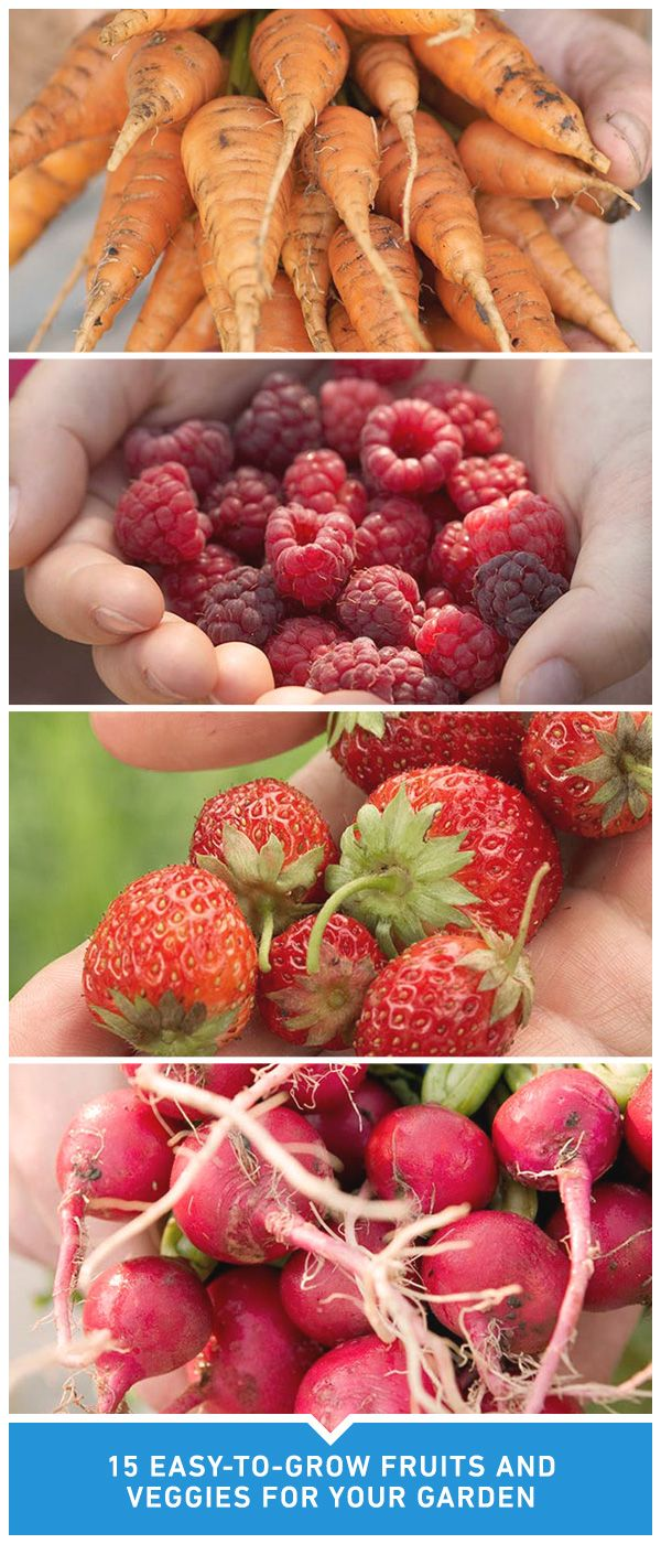 Thinking About Starting Your Own Garden Here Is A List Of 15 Fruits