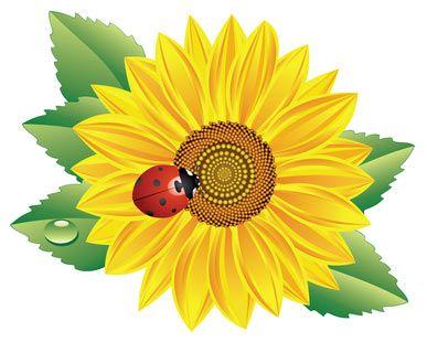 Sunflower Tattoo Bing Images Lady Bug Tattoo Sunflower Tattoos Sunflower Design