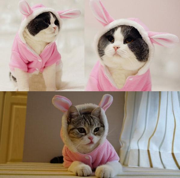 Soft Cat Nail Protector Caps 100 Pcs