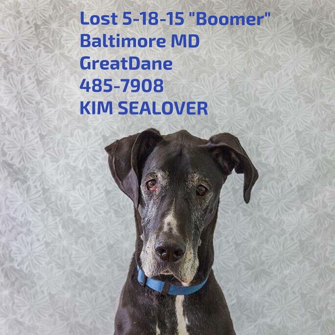 Pin by US LOST DOG REGISTRY on GREAT DANES US LOST DOG