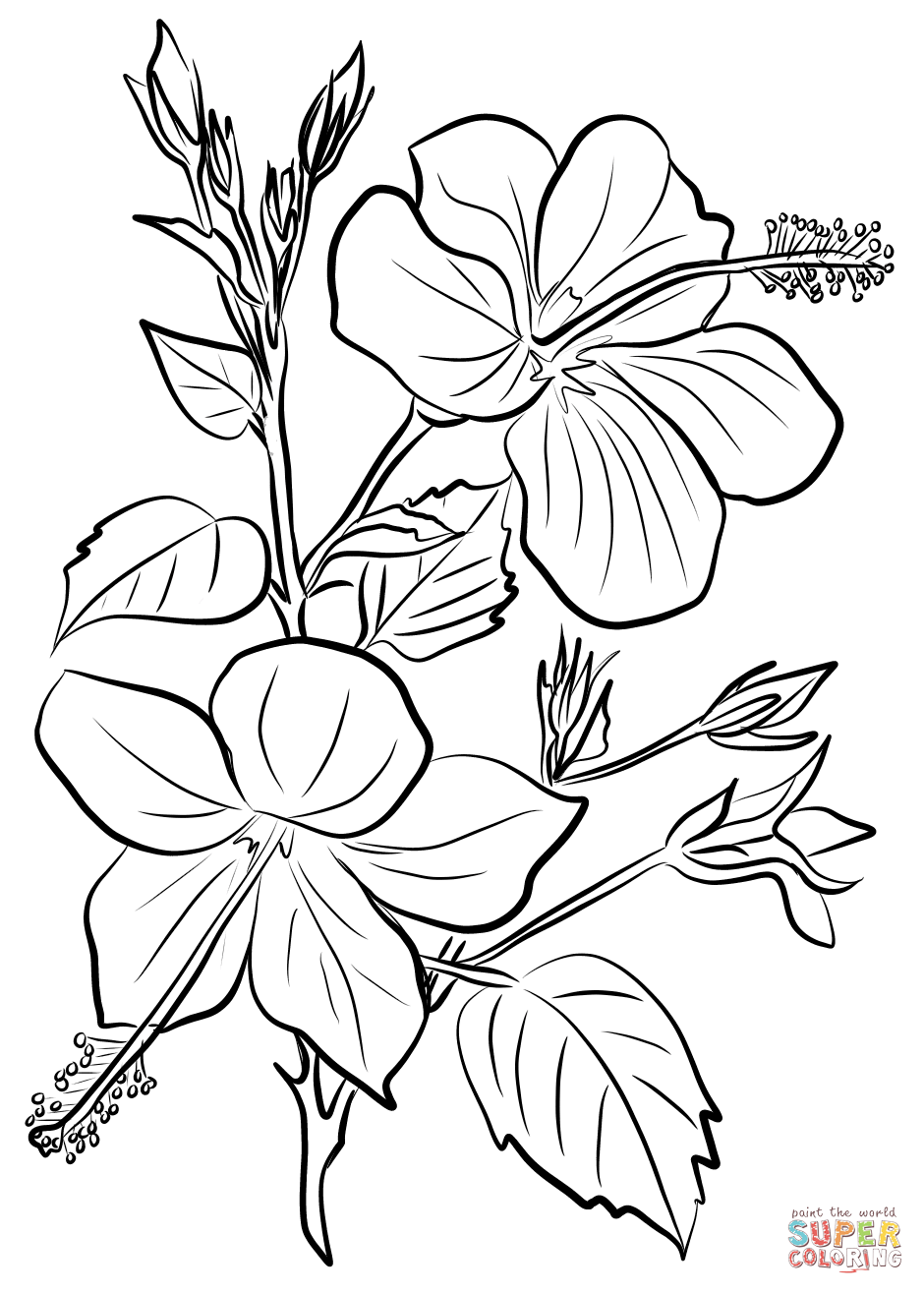 Hibiscus coloring page from Hibiscus category. Select from ...