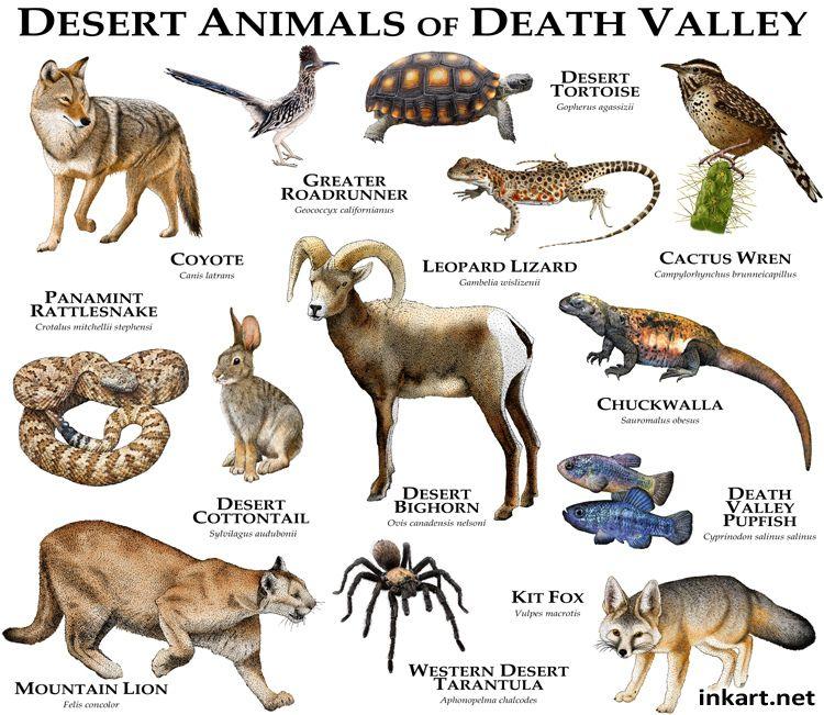 animals of death valley nature animals desert animals wildlife