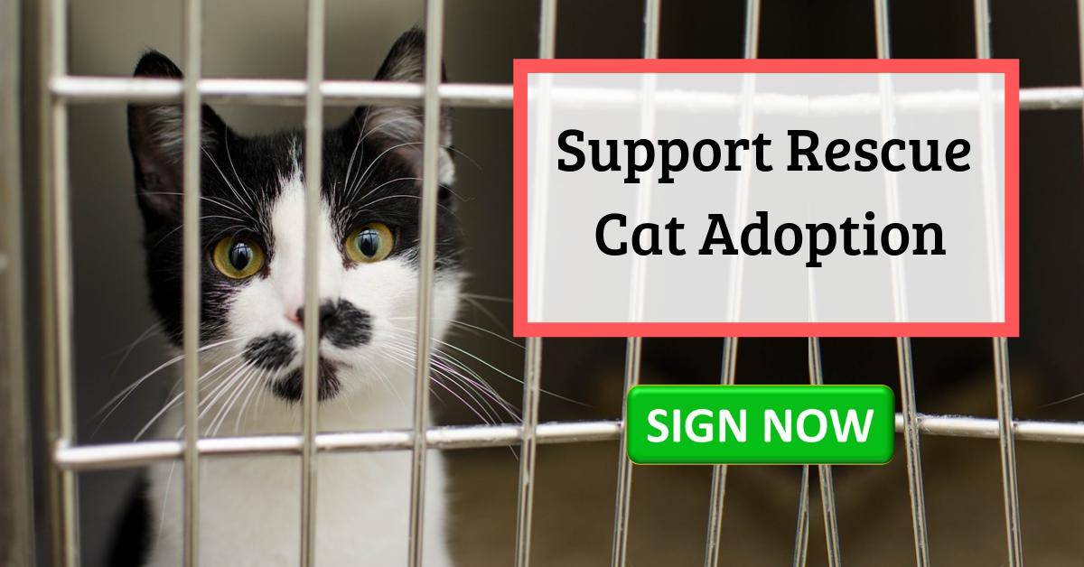 Too Many People Are Buying Cats From Breeders And Neglecting Rescue Cats These Cats Need Your Help If You Support Adopting Cat Adoption Cat Rescue Buy A Cat