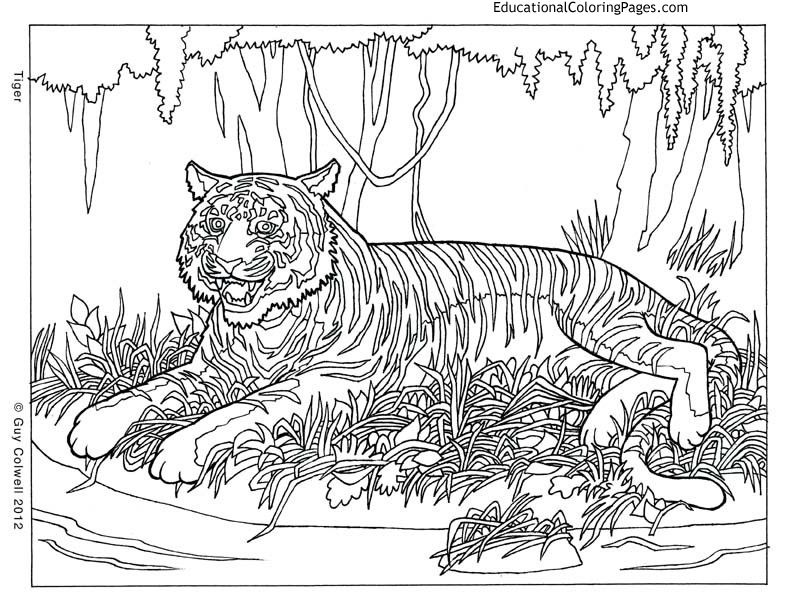 Life Of Pi   Animal Coloring Pages | Educational Fun Kids Coloring