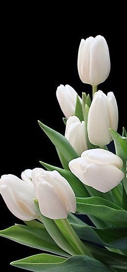 Beautiful Tulips For My Beautiful Sister!! Hurry & Put Them In Water!!