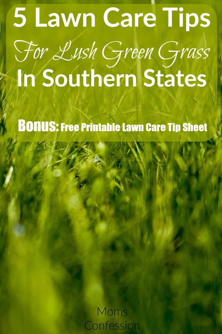 5 lawn care tips for lush green grass in southern states