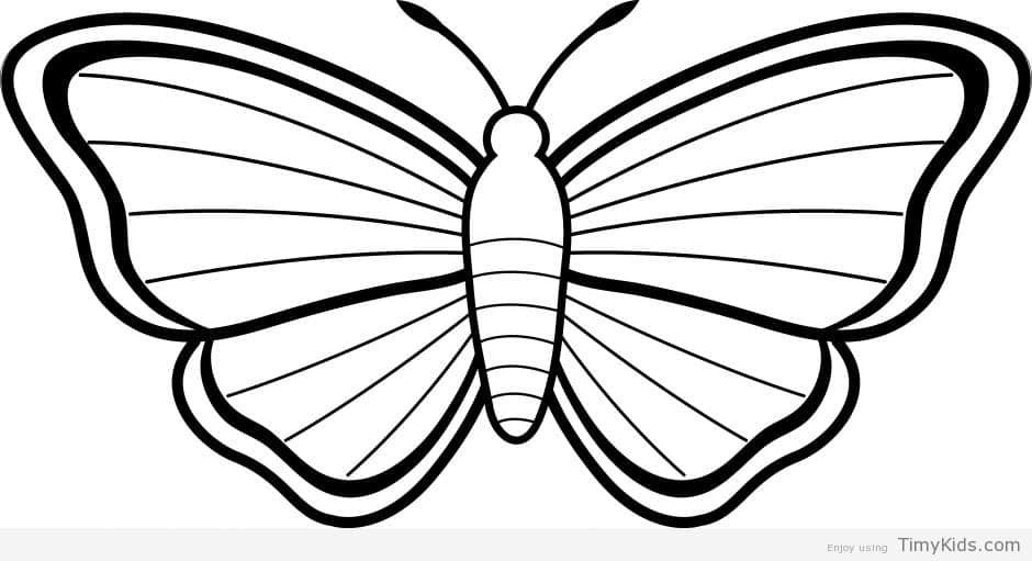 Http timykids com 20 butterfly outline coloring pages html art black butterfly outline white