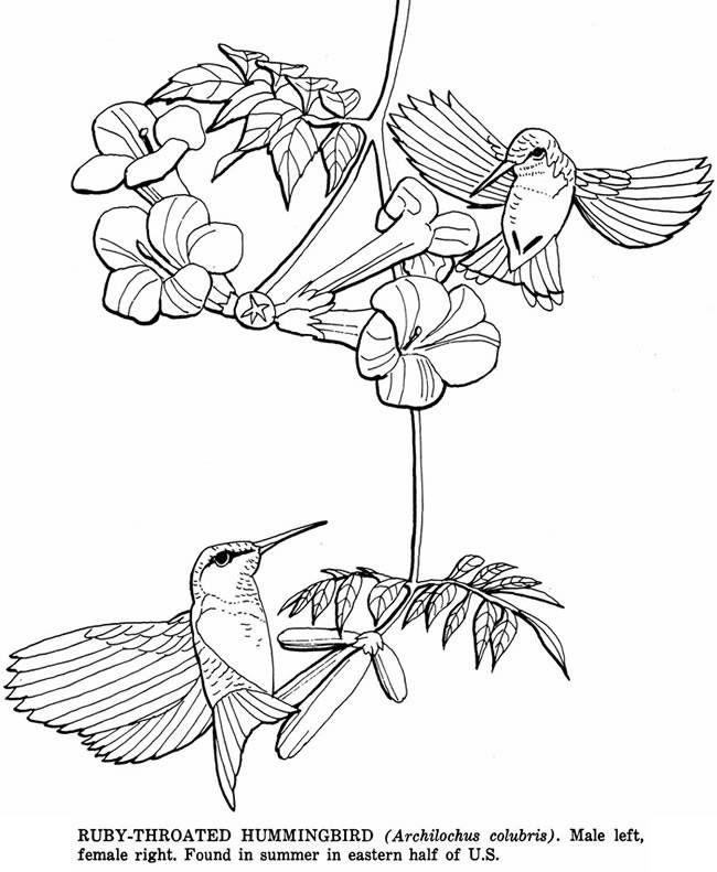 Kleurplaten Van Kleine Vogels.Kleine Vogels Vogels Kleurplaten Bird Coloring Pages Flower