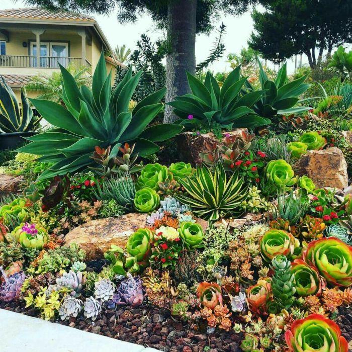 1001 id es fantastiques de d cor avec plantes grasses d 39 ext rieur jardins plantes grasses