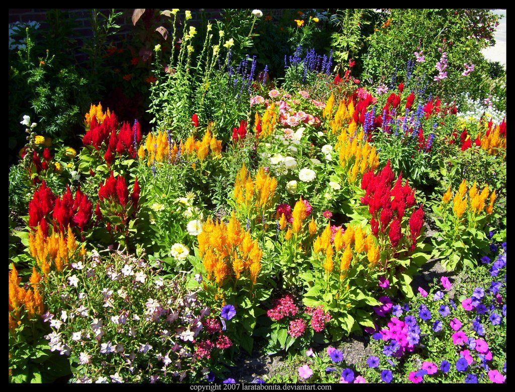 Flower garden perennial plant click on the image for additional flower garden perennial plant click on the image for additional details dhlflorist Images