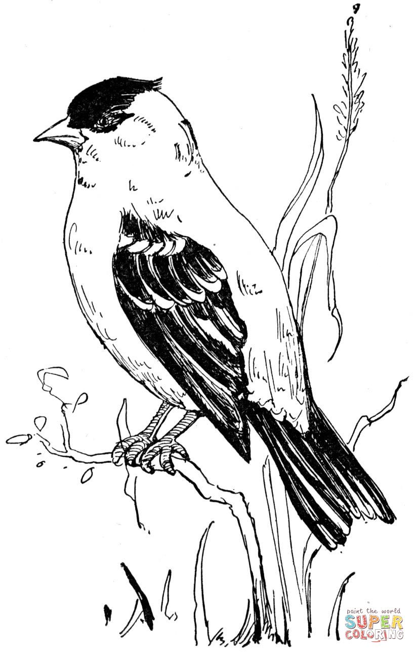 American Goldfinch Colouring Page Supercoloring Com Bird