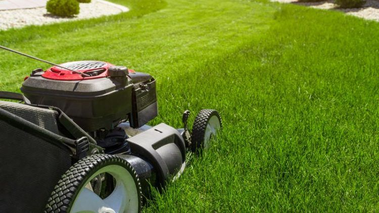 The Five Best Electric Lawn Mowers On The Market Today