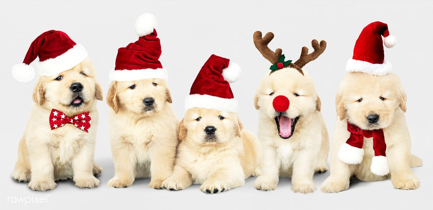 Download Premium Psd Of Group Of Adorable Golden Retriever Puppies