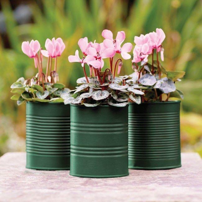 Emalia Akrylowa Altax Viva Garden Zielony Bluszcz 0 25 L Jardin D Hiver Castorama Jardins