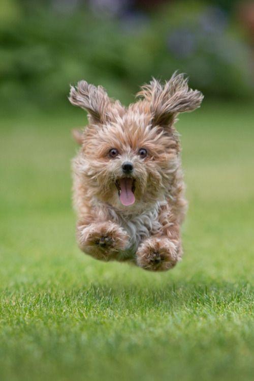 Random Photos Pet Dogs Cute Animals Dogs