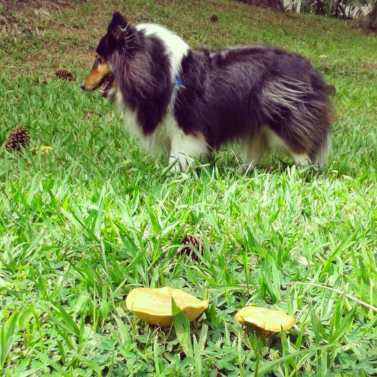 https://www.tumblr.com/indash_blog/peepr/sheltiesfriends