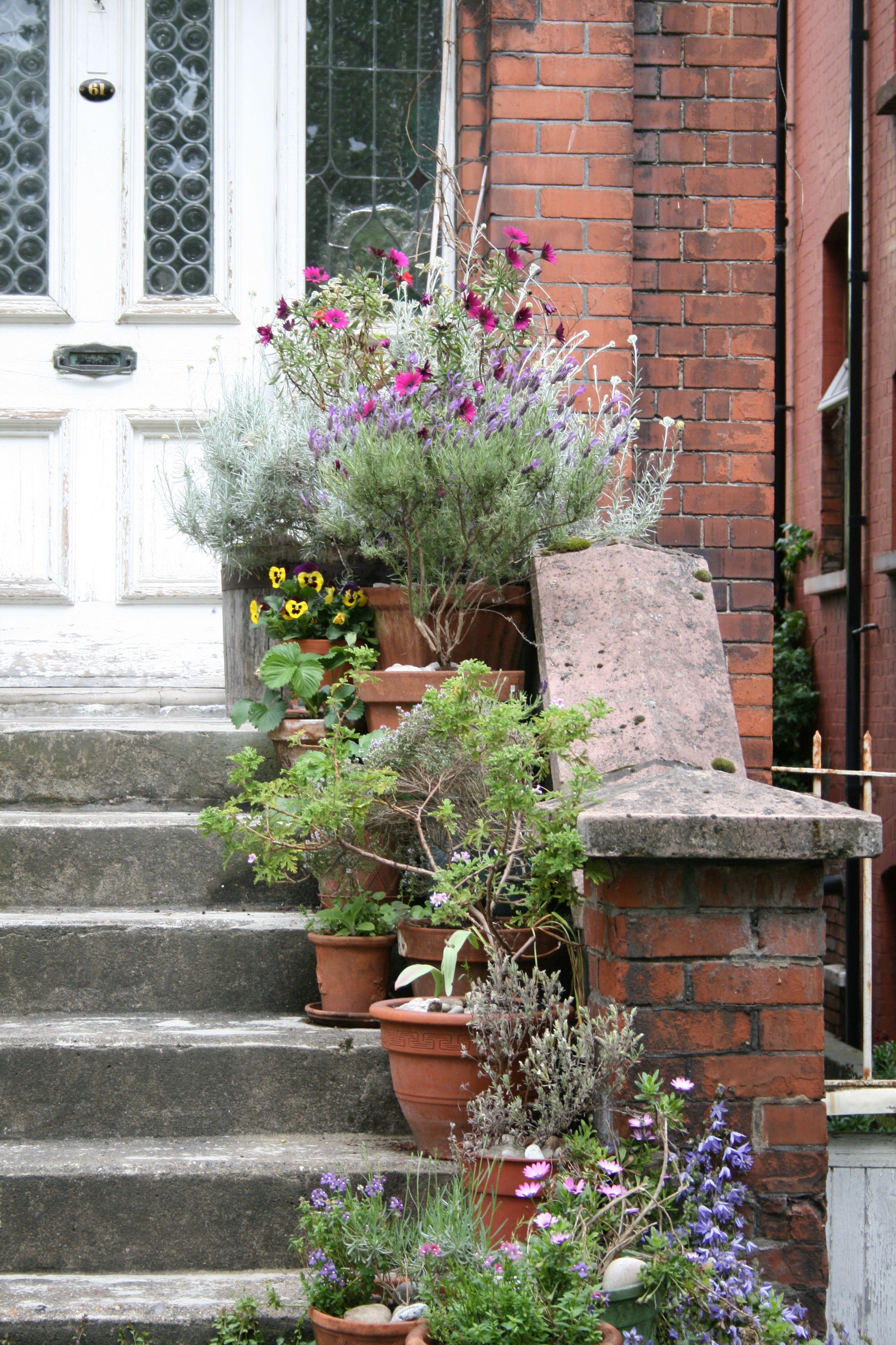 Tufnell Park front door flowers