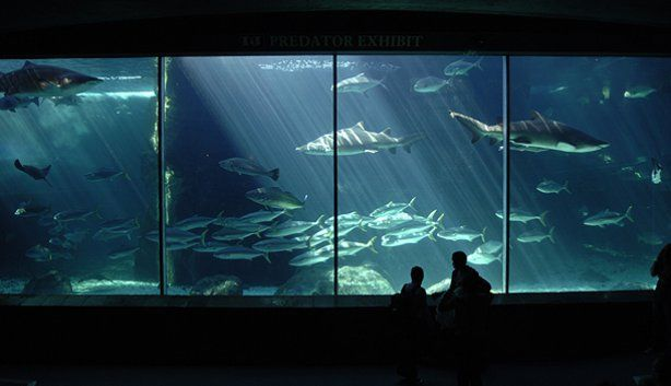 South Africa - Cape Town -Two oceans aquarium - home to thousands of aquatic species.