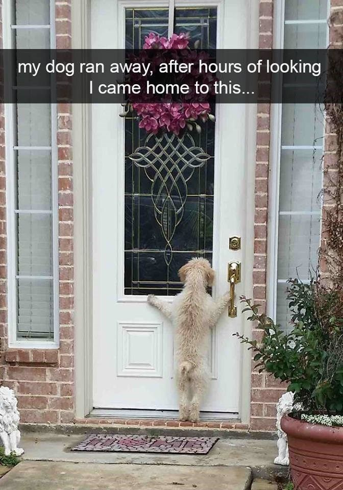 30 Examples of Dogs Being the Funniest Thing on Snapchat #animalcaptions