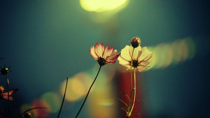 Beautiful Flowers Garden: Beautiful Flower In Summer