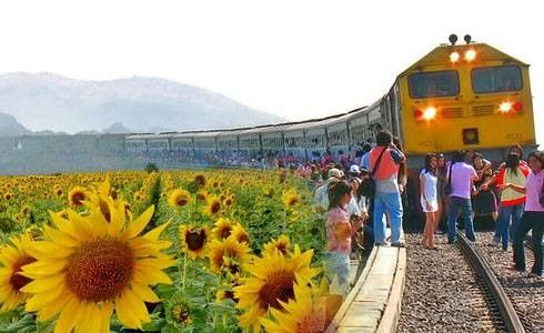 Image result for sunflower train bangkok