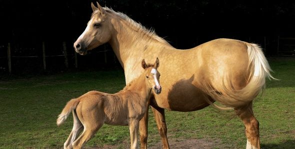 magnificent horses | Top 10: Magnificent and Fun Horse, Pony & Unicorn Gift Ideas