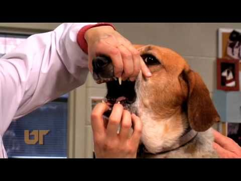 Oncology In Pets Veterinary Oncology Oncology Pet Cancer