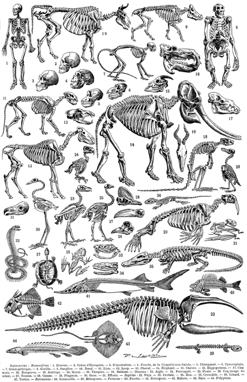 Clawmarks Aspect De Differents Squelettes Scannee Depuis Le Anatomy Art Animal Skeletons Science Poster