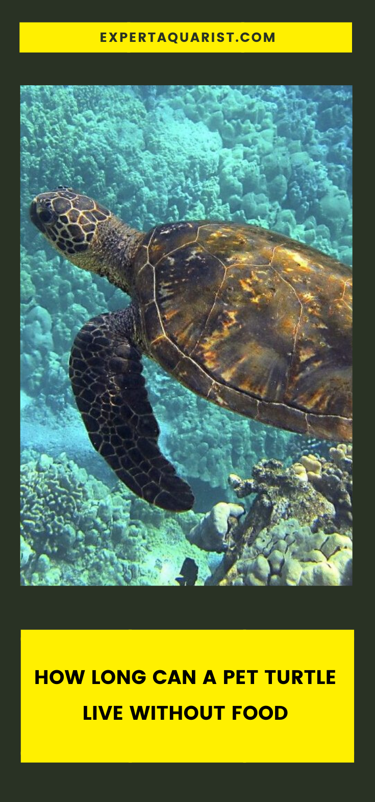 How Long Can A Pet Turtle Live Without Food In 2020 Pet Turtle Aquatic Turtle Tank Turtle