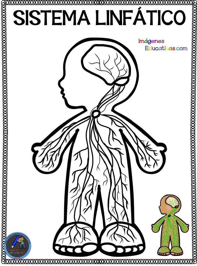 Cuaderno para colorear El Cuerpo Humano (12)   Cuerpo humano, Cuerpo humano  para niños, Aparatos del cuerpo humano