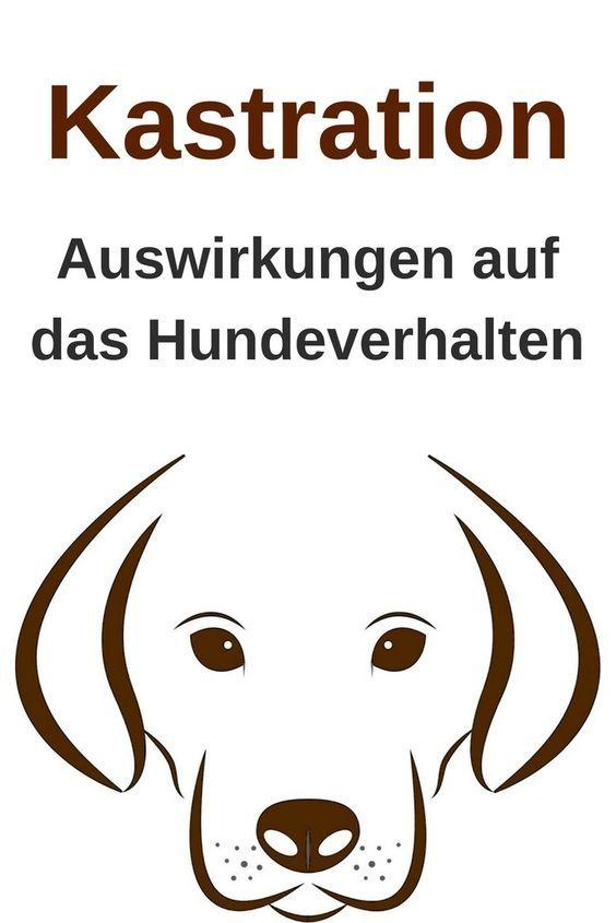 Photo of Auswirkung der Kastration auf das Hundeverhalten – MeinHund24