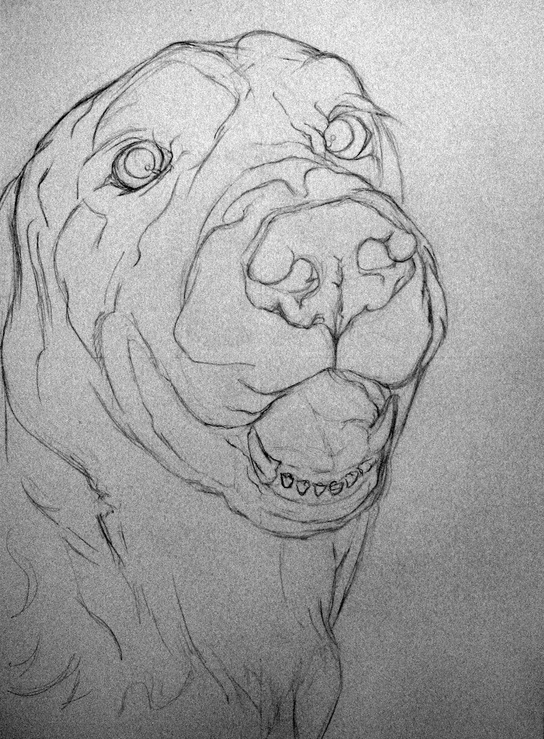 Contour Line Drawing Of A Dog : A dog named biskit contour drawings d and
