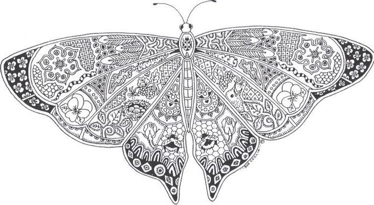 Insect Butterfly Mandala Print Out Butterfly Coloring Page