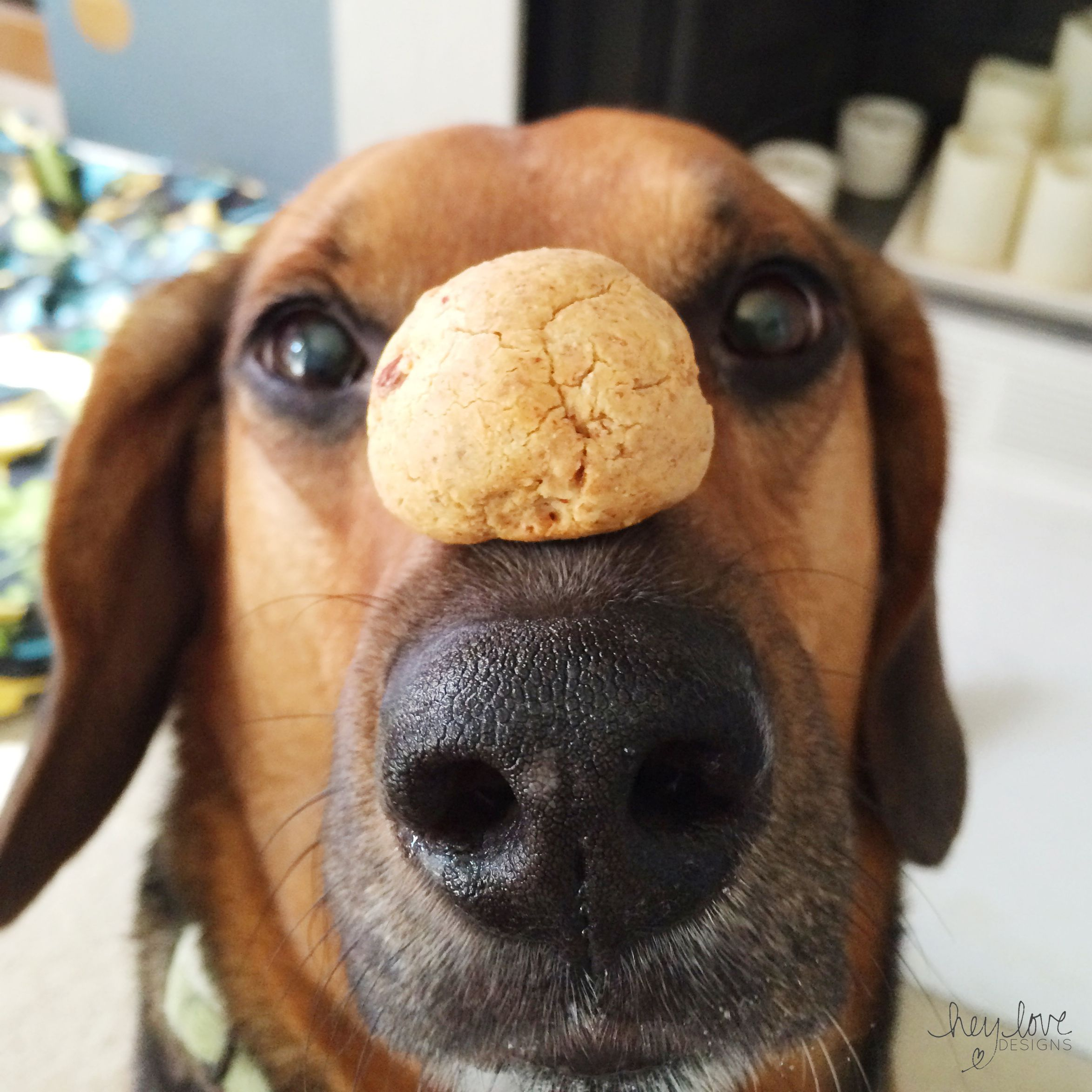 Dog Week: Grain Free Dog Treats | Hey Love Designs