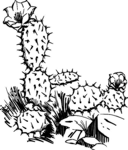 Cactus Coloring Page Fun Coloring Pages for Kids and Adults