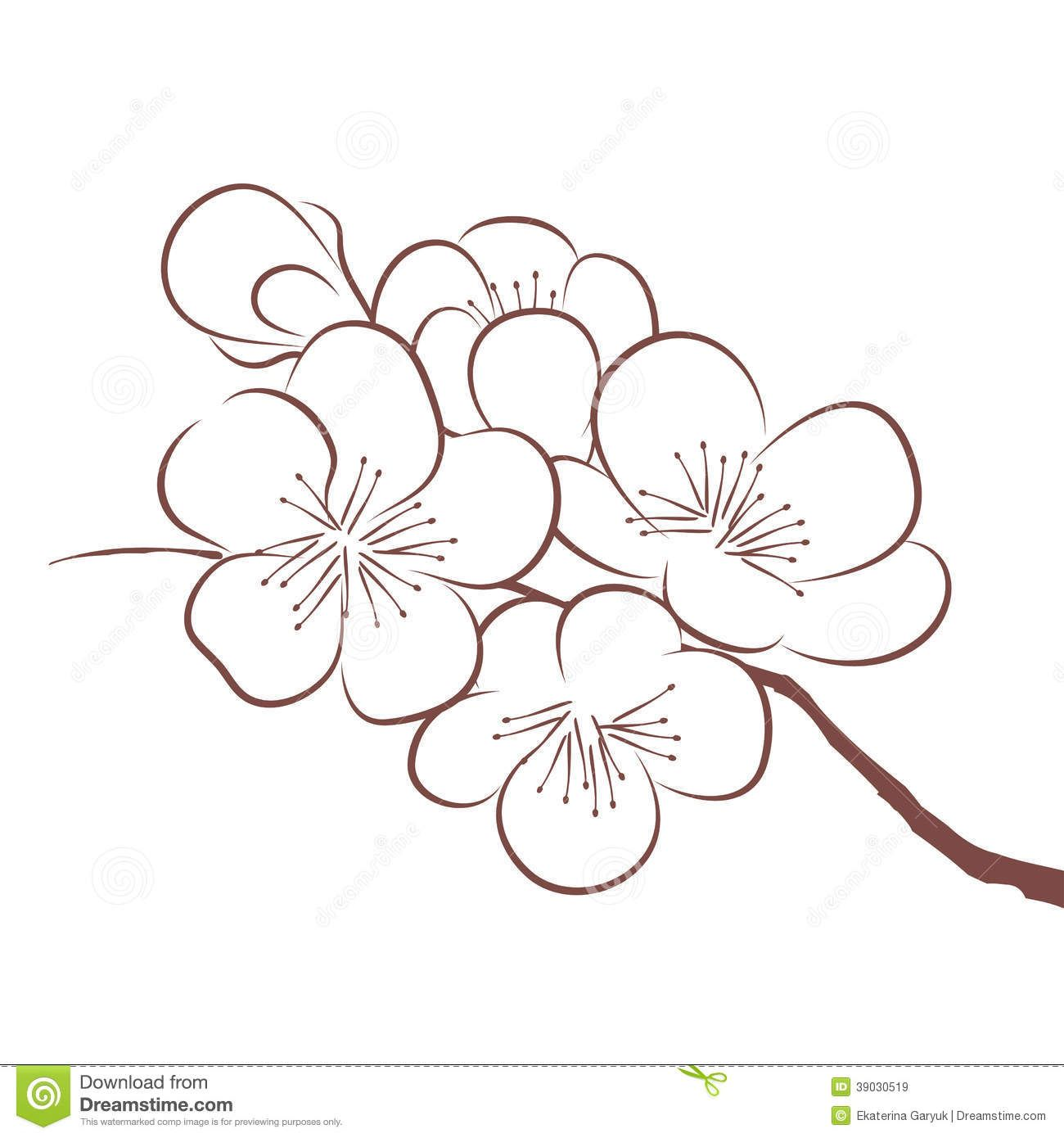Blossom Flower Line Drawing : Spring cherry blossom blooming tree branch close up