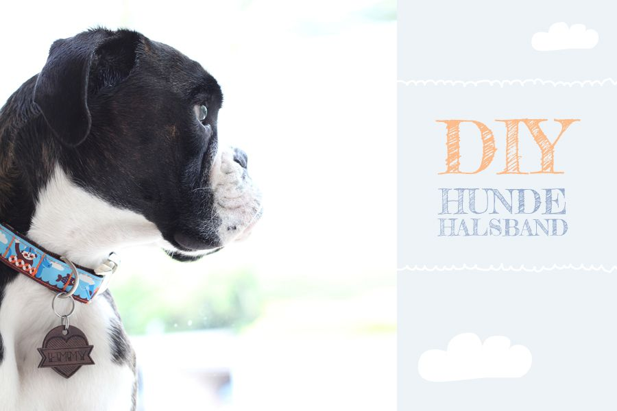 DIY-Freutag} Hundehalsband selber nähen   Selber nähen, Nähen und Hunde